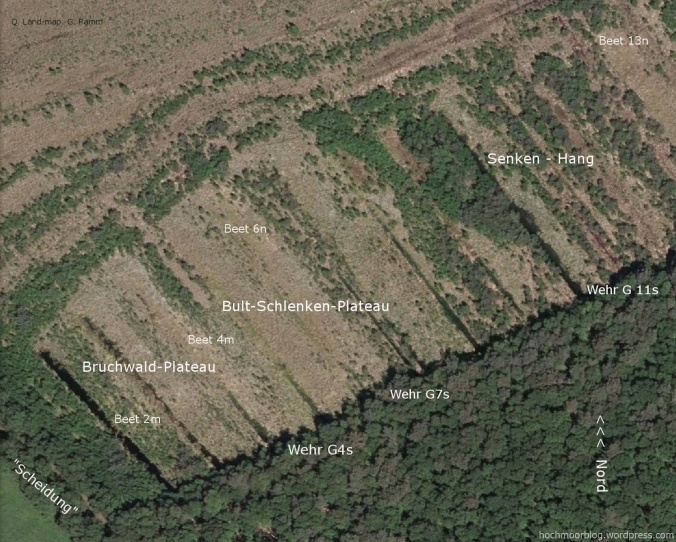 Unser Terrassen-Gebiet mit Pionier-Vegetation nach 15 Jahren der Wieder-Vernässung