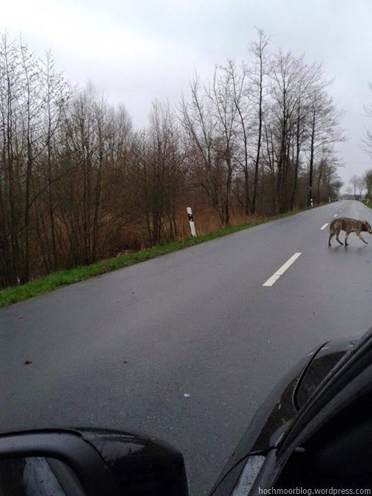 Unterwegs zum Wolfsbruch?